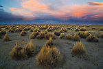 Bolivia, Altiplano, dramatic sunset above grassland north of Salar de Coipasa