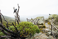 Image Ref: CA293<br /> Location: Charlotte Pass<br /> Date: 27 Jan 2016