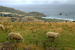 Otago Peninsula.The Otago Peninsula is a long, hilly indented finger of land that forms the easternmost part of Dunedin, New Zealand. Volcanic in origin, it forms one wall of the eroded valley that now forms Otago Harbour. The peninsula lies south-east of Otago Harbour and runs parallel to the mainland for 20 km, with a maximum width of 9 km. It is joined to the mainland at the south-west end by a narrow isthmus about 1.5 km wide..The suburbs of Dunedin encroach onto the western end of the peninsula, and seven townships and communities lie along the harbourside shore. The majority of the land is sparsely populated and occupied by steep open pasture. The peninsula is home to many species of wildlife, notably seabirds, pinnipeds, and penguins, and several ecotourism businesses operate in the area..