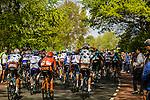 Amstel Gold Race, 20th April 2014, Photo by Thomas van Bracht / www.pelotonphotos.com