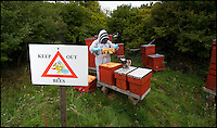 BNPS.co.uk (01202 558833)<br /> Pic: Phil Yeomans/BNPS<br /> <br /> Chris Wilkes with his endangered British black bee hives in the shadow of Imber church.<br /> <br /> Abandoned villlage becomes a hive of activity once more.<br /> <br /> The deserted village of Imber in the heart of Salisbury Plain has new residents again - 70 years after the army controversially kicked out the 200 parishoners during WW2.<br /> <br /> Bee farmer Chris Wilkes has placed 12 hives of the plucky British black bee behind St Giles church in the hamlet to feast on the extraordinary wildflower habitat of the plain that has been protected from pesticides and intensive farming siince the Army moved in.<br /> <br /> The isolation of the village will in fact ensure that the unique colony can thrive five miles from competing honey bee populations and with a cornucopia of the top nectar producing flowers in the UK surviving on the chalk downlands to feed on Mr Wilkes is hoping that the population will establish itself and produce a honey with the distinctive flavour of one of Britains last wilderness areas.