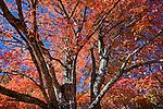 Autumn color in Sedgewick, ME