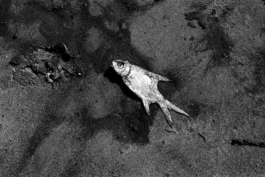 "Mekong Dam Victims - Thailand. A dead fish on the river shore. The building of the Pak Mun Dam in Thailand has lead to strong opposition by the local population as the number of fish and fish species in the river is dramatically reduced because of the dam, affecting more than 20,000 people. Known as ""The Mother of Waters"", more than 60 million people depend on the Mekong river and its tributaries for food, fresh water, transport and other aspects of daily life. The construction of big dams is now threatening the life of these people aswell as the vital and unique ecosystem of the river."
