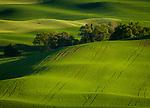 Palouse patterns in the green fields