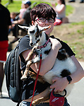 WINSTED,  CT-051819JS08- Beth Whitney with Kaylee's Krazy Acres Farm in Winchester, carries one of her goats during the 83rd annual Rotary Club Pet Parade along Main Street in Winsted on Saturday. <br /> Jim Shannon Republican American