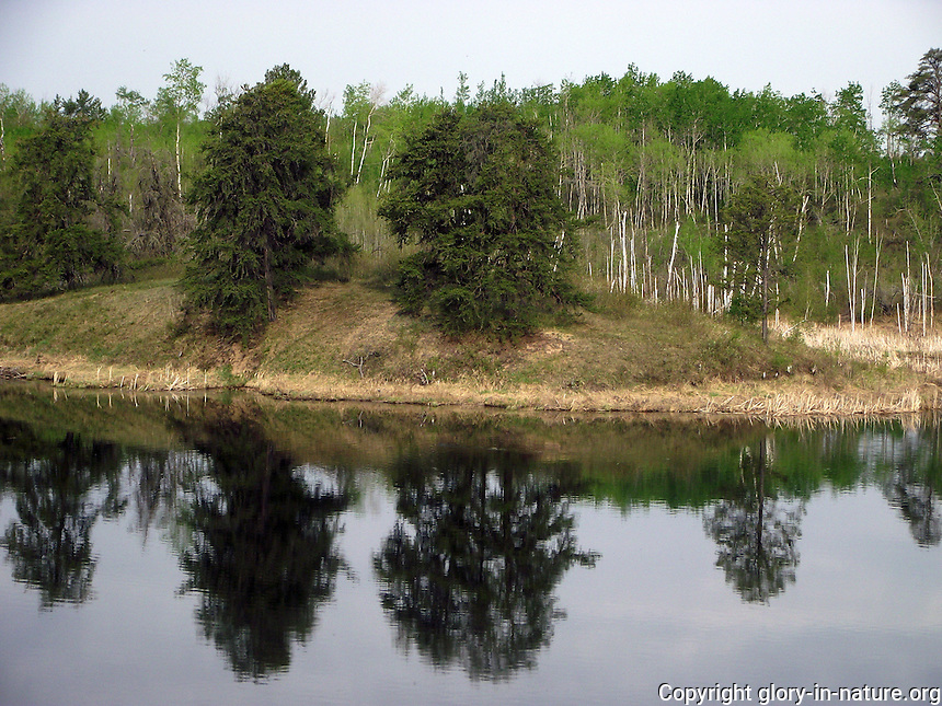 Clear reflection off Bellis Lake, Alberta.