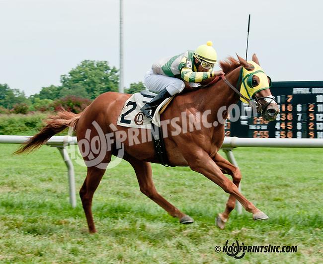 Greek Afair winning at Delaware Park on 8/10/13