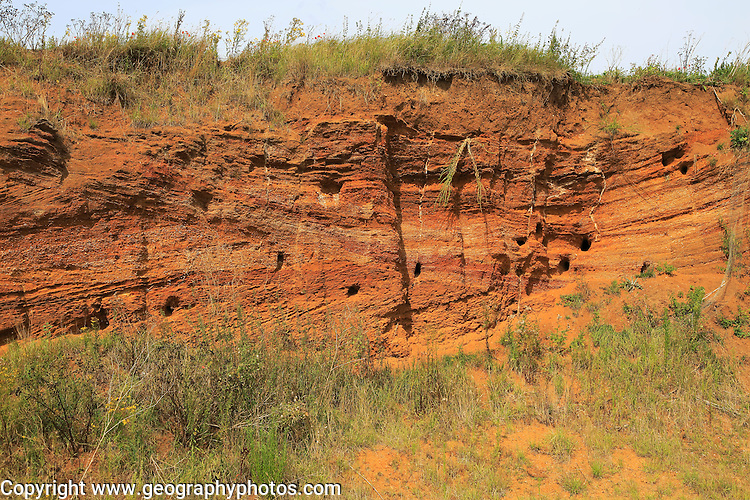 Red crag rock exposed at Buckanay Pit quarry, Alderton, Suffolk, England showing cross bedding of strata and biotic weathering from sand martins