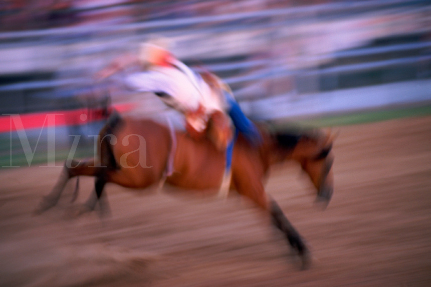 Annual rodeo in a small town near Houston, contestant in bronc riding event. Cypress Texas USA.