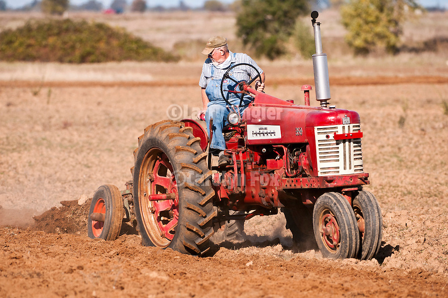 Antique tractors plowing a field in fall during the Branch 158 EDGE & TA Fall Plow Day and Plowing Seminar near Pleasant Grove, Calif...Silmer Scheidel Farm..1958 Farmall 350 tractor plowing
