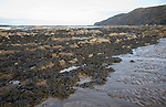 Rocky limestone reef exposed at low tide, Watchet, Somerset, England