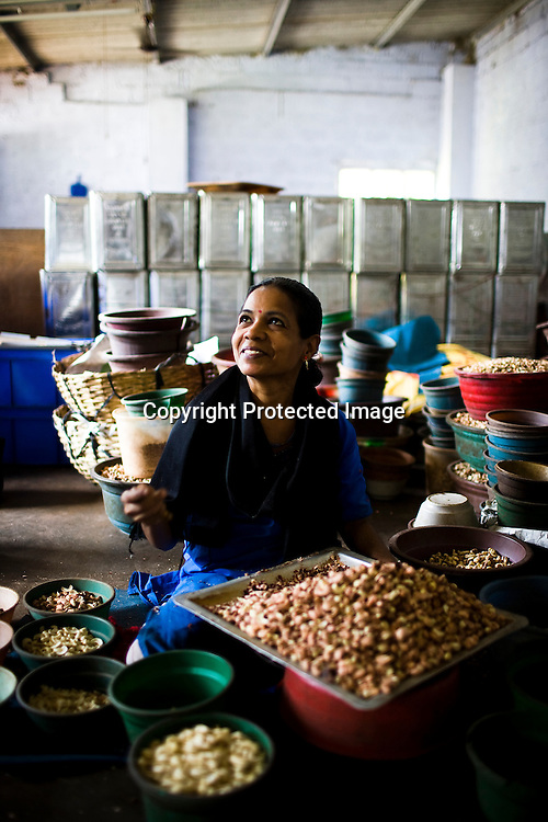 47 years old Uma has been working with cashews since age 15. Here is seen with other women in cashew processing factories in Prassala, Kanyakumari district in Tamil Nadu, India.. .An estimated number of 500,000 women process cashews for a living in Tamil Nadu and Kerela. 2 million people are employed by cashew industry across India making it the world's biggest exporter of shelled cashews. .The working conditions in these processing units are way below industry standards and violates the basic rights. Wages are as low as Rs. 50 (US $1) per day. The problems for these women is not restricted to low wages. Many women are being injured by their jobs as the factory owners cut corners with health and safety. Oil released during the cashew shelling process is highly caustic, leading to common cases of dermatitis, blistering and discolouration of workers' skin. Women working in these units suffer from pains in their leg muscles, backs and knee joints after squatting positions on mud or concrete floors. It is very rare to find tables and chairs provided on shelling duty..Cashew workers' main concern is to increase their earnings and provide better working conditions. .Photo: Sanjit Das