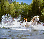 Horses, Methow River, Washington