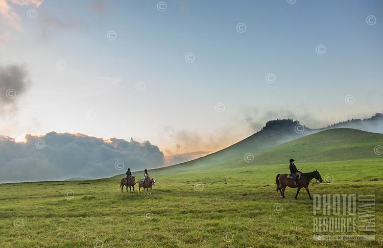 At sunset, visitors enjoy horseback riding over the mystical hills of Kohala, Hawai'i Island. This part of Kohala is in Waimea, near sunset.