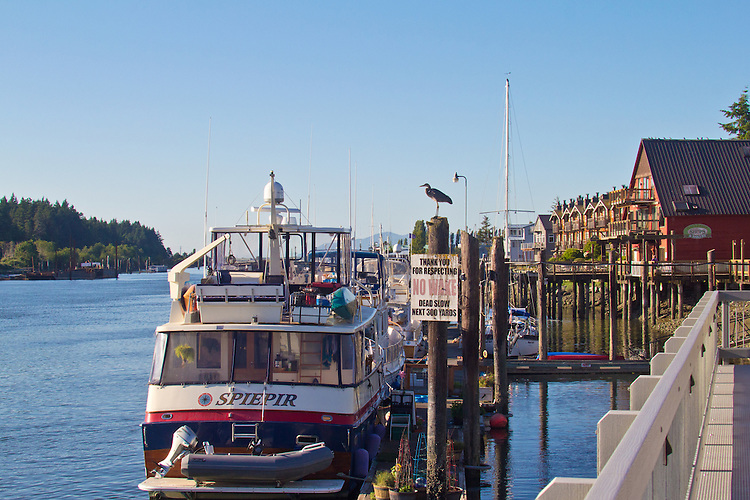 La Conner, Waterfront Boardwalk, Heron, Swinomish Channel,  Skagit County, Washington State,