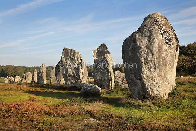 Kermario standing stones, large megaliths in a fan arrangement, with 1029 menhirs in 10 alignments, about 1,300m long, near the village of Carnac, Morbihan, Brittany, France. One 3m high menhir forms part of the Manio tertre tumulus. The Carnac stones were erected in the Neolithic period by pre-Celtic breton peoples. Picture by Manuel Cohen