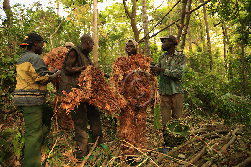 The men put on the heavy suit of wood fibres, indispensable for a daytime harvest. The sap from the tree that produces this wood gives off a substance that repels the bees.