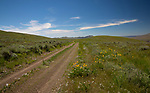 Idaho, South Central, Custer County, Arco. Wildflowers line the road along Arco Pass in late spring.