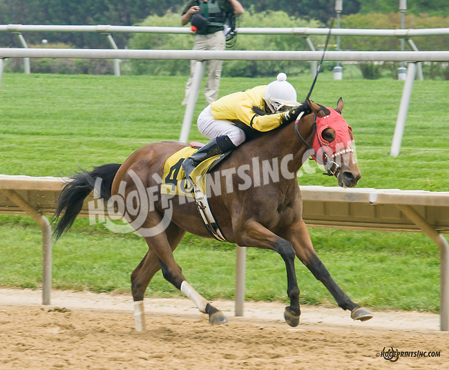 Word Runner at Delaware Park on 5/16/15