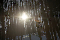 FOREST_LOCATION_90112