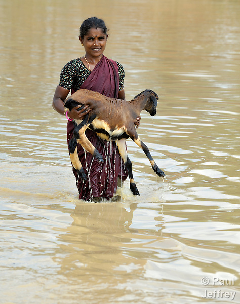 A woman carries a goat from a pond after bathing the animal, near Anaikulam, a small village in the state of Tamil Nadu in southern India.