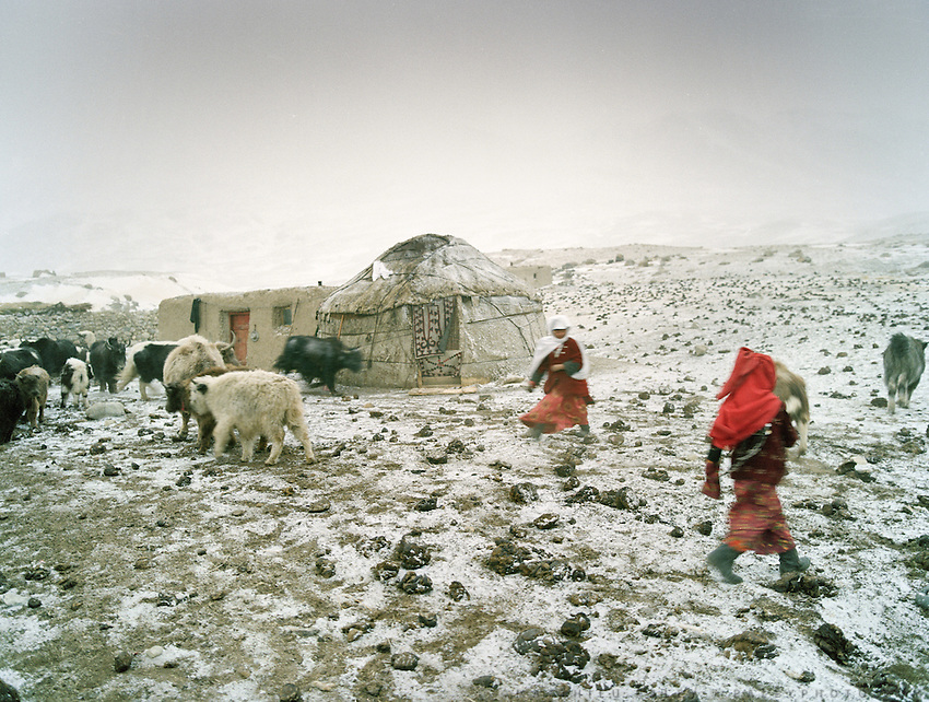 Chelab camp..Every evening, Kyrgyz gather their yak herds back to their camp..Winter expedition through the Wakhan Corridor and into the Afghan Pamir mountains, to document the life of the Afghan Kyrgyz tribe. January/February 2008. Afghanistan