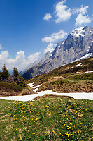 CHE, Schweiz, Kanton Bern, Berner Oberland, Grindelwald: Chalberboden unterhalb Grosser Scheidegg mit Engelhoerner ueber dem Rosenlauital | CHE, Switzerland, Bern Canton, Bernese Oberland, Grindelwald: Chalberboden below Grosse Scheidegg with Engelhoerner mountains above Rosenlaui Valley