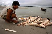 O pescador artesanal Alonso Martins do Carmo, 33, conhecido como Candirú, realiza a retirada do grude (órgão interno com alto valor comercial, usado pela indústria farmacêutica e cosmética), de peixes da espécie Corvina após a despesca realizada nas proximidades da praia de Paxicú na Reserva Extrativista Marinha Mãe Grande localizada no litoral do Pará, na foz do rio Amazonas.<br /> Curuça, Pará, Brasil <br /> Foto:Paulo Santos<br /> 18/02/2011