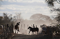 Juvenilia_MG, Brasil...Boiadeiros em uma fazenda em Juvenilia, Minas Gerais...Herdsmen in a farm in Juvenilia, Minas Gerais...Foto: LEO DRUMOND / NITRO