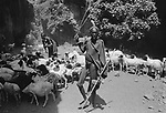 Turkana herder, Lokitaung nr the Ilami triangle in the  Northern part of the Kenya bordering Sudan and Ethiopia.<br /> <br /> The Turkana are herders of sheep and goats and  are constantly migrating with their herds in search of fresh pastures.