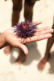 MAURITIUS, a boy holds a sea urchin in his hand on the beach at Ile aux Cerfs Island