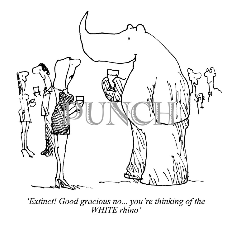 'Extinct! Good gracious no... you're thinking of the WHITE rhino'