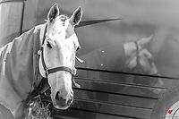 2018 NZL-Puhinui International Horse Trials. Auckland. Thursday 6 December. Copyright Photo: Libby Law Photography