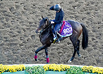 October 31, 2019: Breeders' Cup Juvenile Turf entrant Arizona, trained by Aidan P. O'Brien, exercises in preparation for the Breeders' Cup World Championships at Santa Anita Park in Arcadia, California on October 31, 2019. John Voorhees/Eclipse Sportswire/Breeders' Cup/CSM