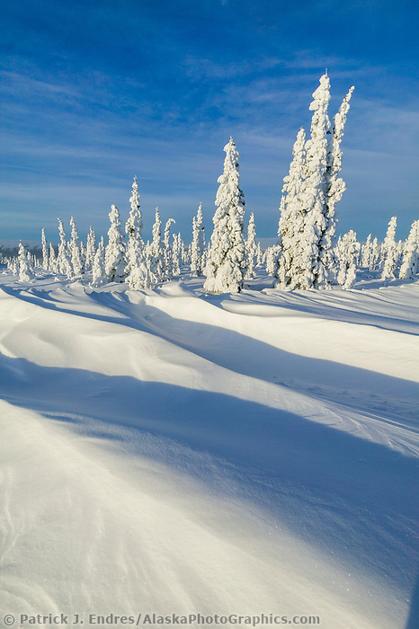 Snow covered spruce trees and wind blown snow, Arctic, Alaska