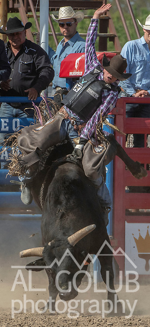 Bull rider Boudreaux Campbell from Crockett, Texas scores 86.5 points at the 68th annual Oakdale Saddle Club Rodeo on Sunday, April 14, 2019.  (Al Golub/Record Photo)