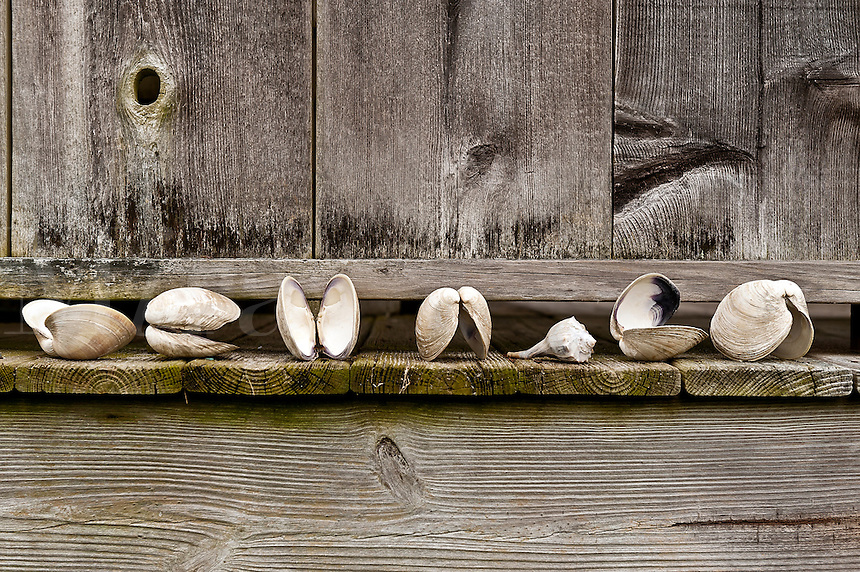 Seashells lined up by a rustic outdoor shower.