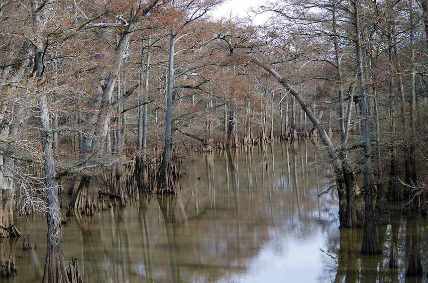 Cypress trees on Bayou Bartholomew in Jefferson County, Arkansas
