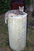 Cat sitting on plinth