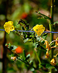Yellow Wildflower. Image taken with a Fuji X-T3 camera and 200 mm f/2 OIS lens