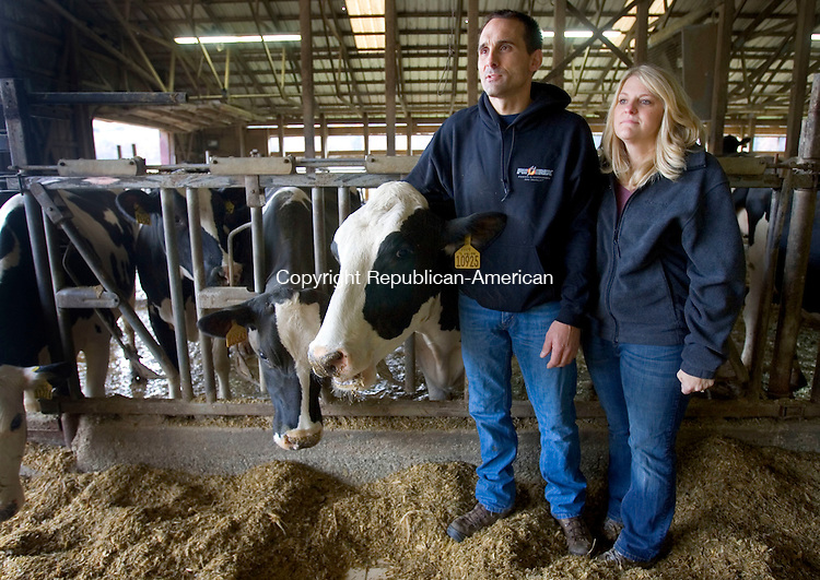 CANAAN CT. 20 October 2014-102014SV03-Cricket and Jennifer Jacquier of Laurelbrook Farm stand with their dairy cows in their barn in Canaan Monday. Immigration was supposed to be a big issue in this campaign but it has taken a back seat following President Obama's decision to hold off on making any executive decisions on immigration until after the election.  Immigration isn't only an issue down south along the Mexican border but in Connecticut also, where dairy farmers say they need the immigrant population to work the farms. <br /> Steven Valenti Republican-American