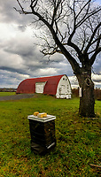 Bee hive and barn at the Braun Farm in Westerville OH