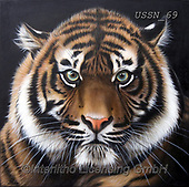 Sandi, REALISTIC ANIMALS, REALISTISCHE TIERE, ANIMALES REALISTICOS, paintings+++++,USSN69,#a#, EVERYDAY ,tiger,tigers, ,puzzles