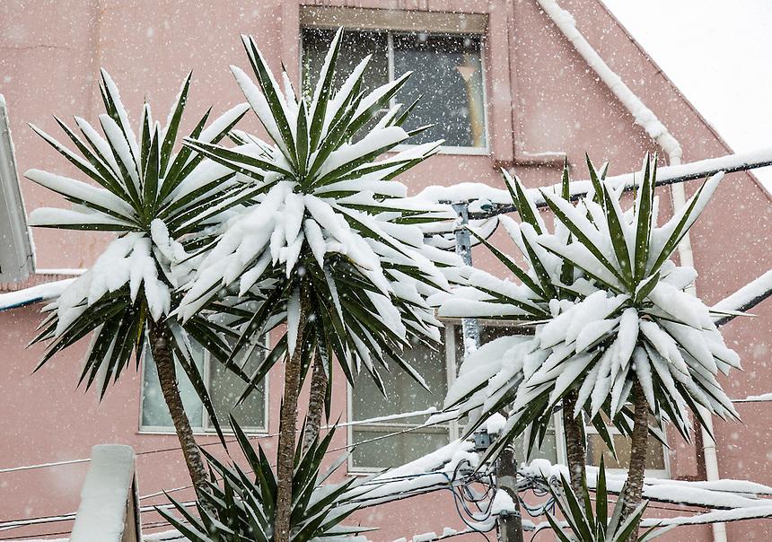 Tokyo Snow - heaviest in 46 years