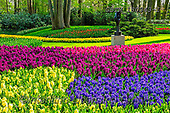 Tom Mackie, LANDSCAPES, LANDSCHAFTEN, PAISAJES, photos,+Dutch, Europa, Europe, European, Gardens, Holland, Keukenhof Gardens, Lisse, Netherlands, Tom Mackie, bloom, blooming, blosso+m, blossoms, blue, botanic, botanical, color, colorful, colour, colourful, daffodil, daffodils, flower, flowers, gardensgalle+ry, green, horizontal, horizontals, landscape, landscapes, purple, season, spring, tourist attraction, tulip, tulips, yellow,+Dutch, Europa, Europe, European, Gardens, Holland, Keukenhof Gardens, Lisse, Netherlands, Tom Mackie, bloom, blooming, blosso+,GBTM180343-1,#l#, EVERYDAY