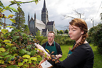 Blackerries are ripe for picking&hellip; Nakita Burke and Daniel Cronin from the Deenagh Lodge tearooms which supports people with Downs Syndrome pick some juicy blackberries beside St Mary's Cathedral Killarney this week which have ripened nearly three weeks before normal.  The abundant berries have arrived early due to the very pleasant summer.<br /> Picture by Don MacMonagle