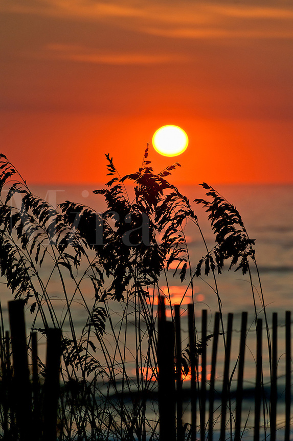 Sea oats sunrise, Outer Banks, North Carolina, USA