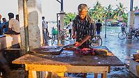 Negombo fish market (Lellama fish market), panoramic photo of a man gutting fish, Negombo, West Coast of Sri Lanka, Asia. This is a panoramic photo of fisherman working at Negombo fish market (Lellama fish market) gutting fish, Negombo, West Coast of Sri Lanka, Asia