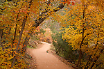 Utah, Zion National Park. Trail through the autumn maples.