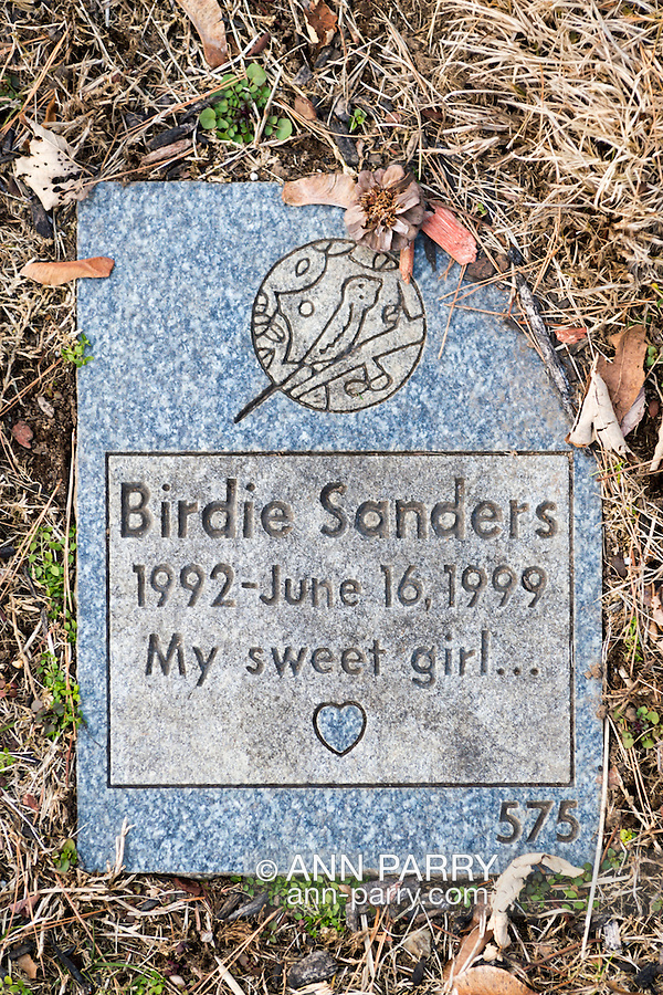 """Wantagh, New York, USA. February 5, 2017.  Blue and gray granite tombstone for pet bird BIRDIE SANDERS (1992 - 1999) with epitaph """"My sweet girl..."""" inscription is one of hundreds of gravestones in Bide-a-Wee Pet Memorial Park cemetery outside the Last Hope Animal Rescue building on Long Island."""
